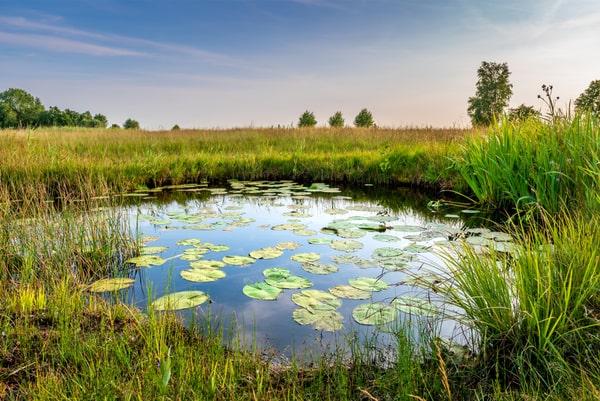 Blog environnement et écologie