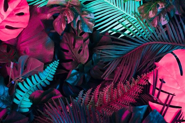 Arbre lampadaire plante phosphorescente